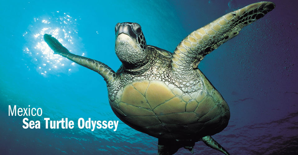 Conservation Adventure Mexico Sea Turtle Odyssey Pacific Coast