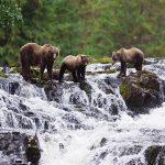 Expedition: Exploring Alaska's Wild & Scenic Coastal Wilderness